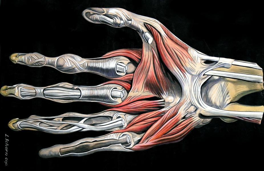 Rejuvinating Stem Cells Could Repair Muscle In Diseases Like
